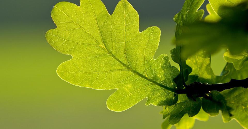 Engagement responsable et empreinte environnementale